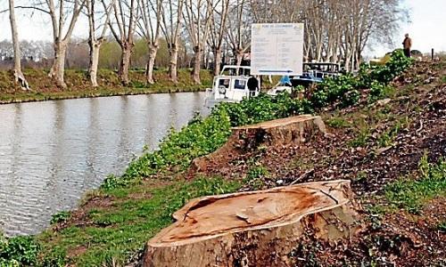 Pétition : L'arrêt de l'abattage et la mise en place d'un traitement 100% naturel qui a fait ses preuves concernant les platanes du Canal du Midi.