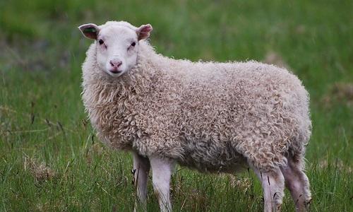 Pour arrêter la torture animale et les tueries abjectes sur les animaux en abattoir.