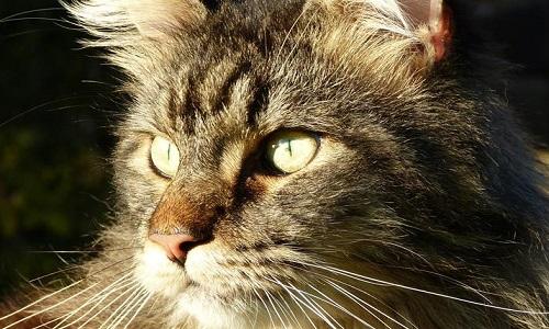 Pétition : Condamnation exemplaire pour le tueur d'un chat
