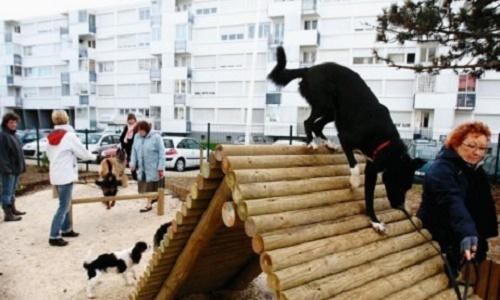 Pétition pour l'obtention d'un parc canin à Sept-Îles.