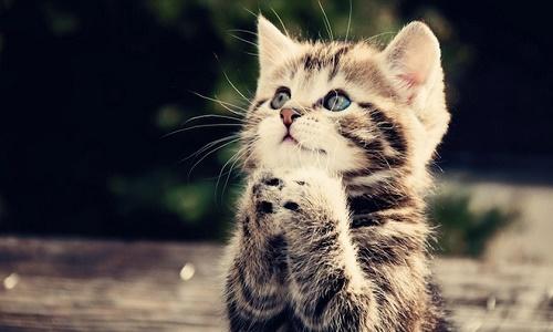 Interdire le dégriffage des chats au Québec