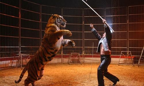 Plus d'animaux dans les cirques