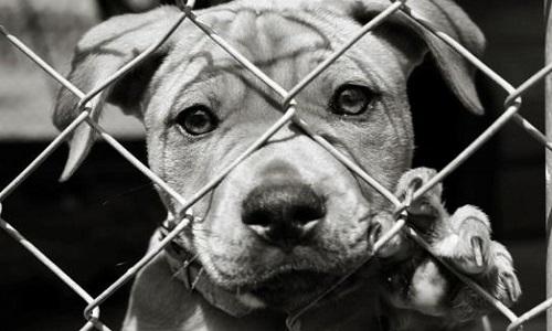 La condamnation sur la maltraitance envers les animaux