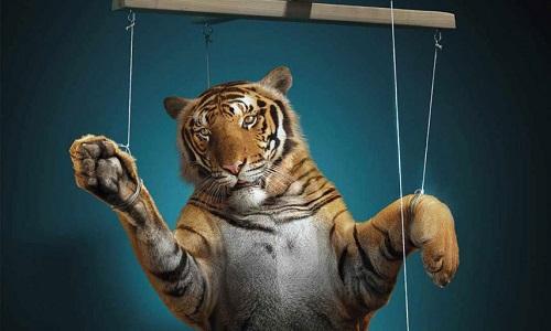 Stop aux cirques avec animaux sur la CUMPM