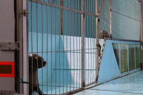 Non aux cirques avec animaux sauvages sur la commune de Chatellerault et celle de la Capc