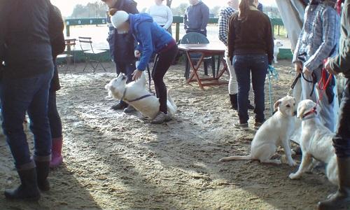 Mettons fin aux maltraitances dans les clubs canins