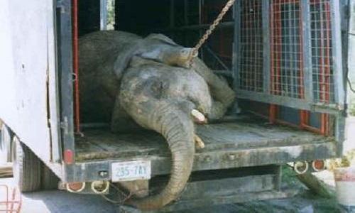 Faisons en sorte que le cirque fasse des spectacles sans animaux !