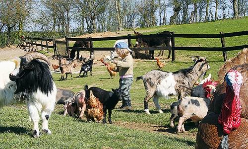 Que soit sévèrement punis les auteurs de cruauté envers les animaux