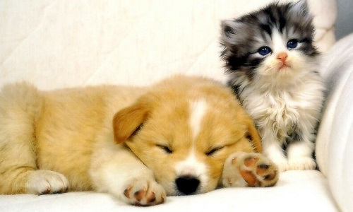 Ras le bol de la maltraitance aux animaux