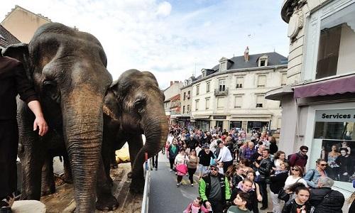 OUI au Carnaval à Montluçon (03) MAIS sans éléphant
