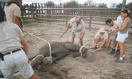 Interdiction des cirques avec animaux dans toutes les villes du Pays de Gex!