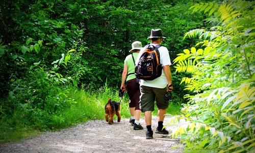La gratuité pour les animaux en terrain de camping
