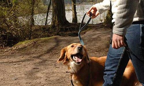 La mobilisation pour les chiens volés à Levallois-Perret