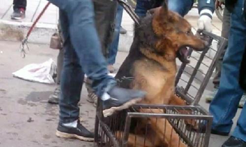 Pétition : Appel au boycott mondial de la TUNISIE et du MAROC tant qu'ils massacreront les chiens errants !