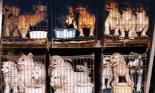 Interdiction de vente de chiens,chats dans les animaleries, dans les salons, foires et dans les petites annonces