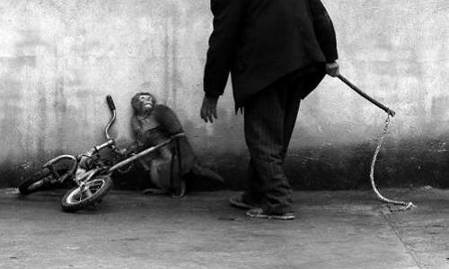 Pour des cirques sans animaux dans la ville de Toulouse