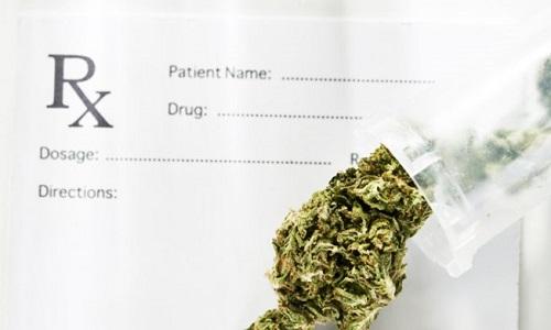 Pétition : La légalisation de la marijuana dans la médecine