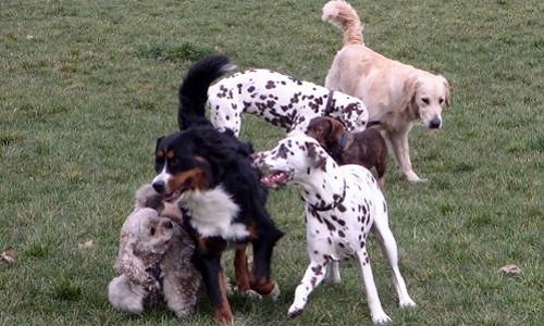 Pétition : Préservons la liberté des chiens au Bois de Vincennes !