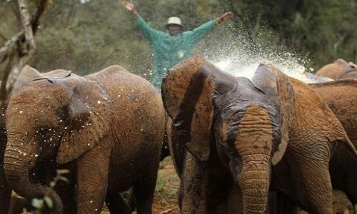 Répression accrue contre les braconniers tueurs d'éléphants.