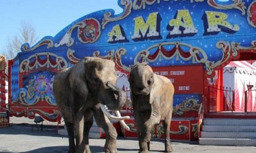 Non aux cirques avec animaux sauvages sur la commune de Rodez