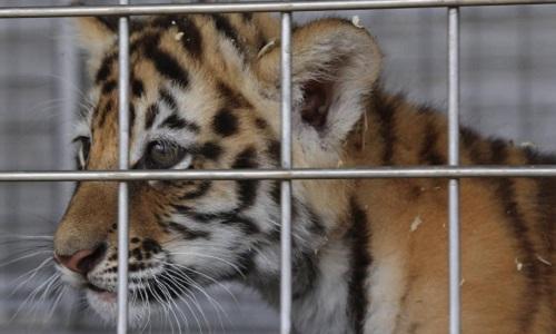 Pétition : Non aux spectacles de dressage d'animaux sauvages. Respectons les animaux!