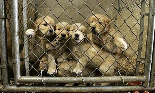 Arrêtez de vendre des animaux!