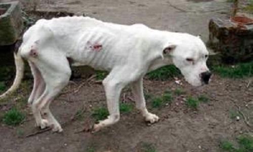 Pour des sanctions sévères en cas de maltraitance sur les animaux et leur mise en application !