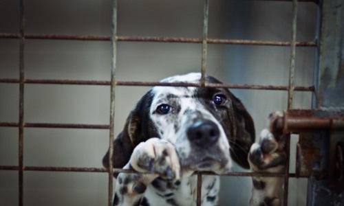 """Résultat de recherche d'images pour """"animaux en cage"""""""