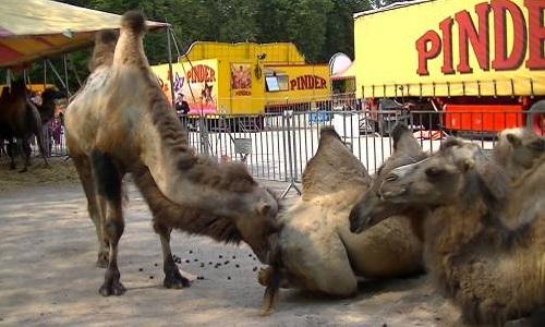 Pas de cirques avec animaux à Salernes!