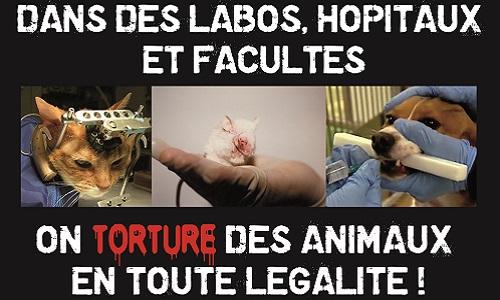 Pour l'abandon du modèle animal pour la recherche médicale et l'enseignement et pour le développement des méthodes substitutives à l'expérimentation animale au pôle santé de Nancy Brabois