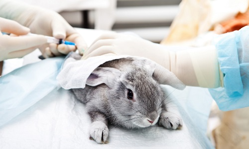 Pour arrêter les tests sur les animaux dans les laboratoires !