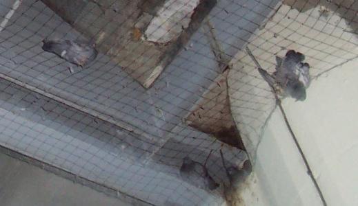 On demande à la SNCF d'arrêter d'investir dans la maltraitance animale.