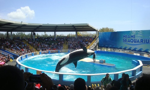 Free Lolita - To end this mental and physical torture