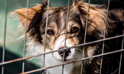 Pour que les animaux ne puissent être adoptés que sous certaines conditions !