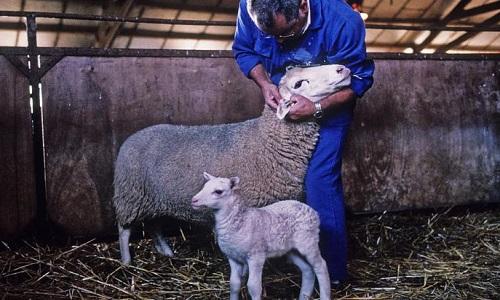 Pour la création d'un Ministère de la condition animale