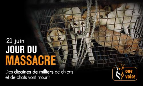 Pétition : Yulin: stop à la fête du martyre animal !