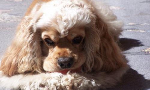 Pétition : Peine maximale avec prison ferme pour le propriétaire du chien jeté du 6ème étage suite à une dispute conjugale à Toulon