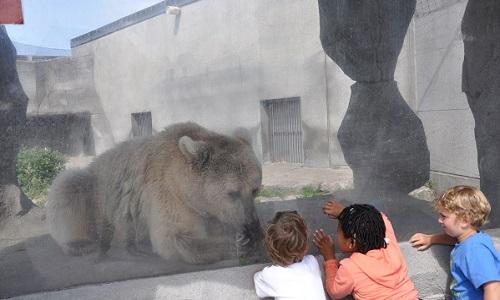 Le transfert de certains animaux vers des refuges (les rennes) et l'agrandissement de certains enclos ainsi que la mise en place de stilumus