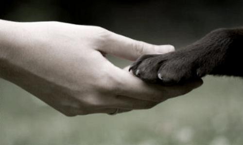 Sauver les animaux maltraités!