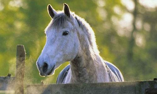 Considérez-vous le cheval comme un animal de compagnie comme le chien ou le chat? Et donc un statut qui empêcherait l'animal de finir à l'abattoir.