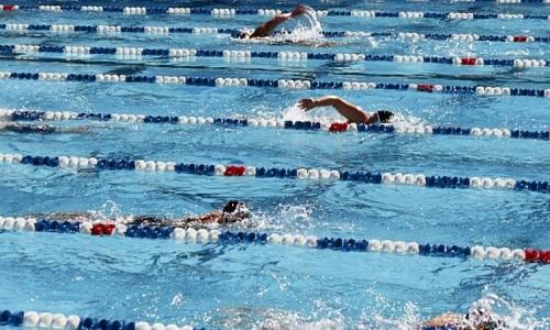 Accréditations pour les entraîneurs aux Championnats d'Europe masters natation de Londres