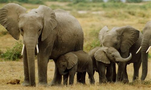 Sauvez les derniers éléphants!