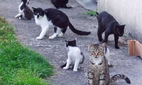 L'arrêt des persecutions contre les chats errants d' Emerainville