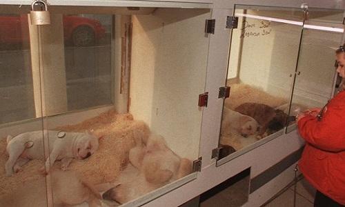 Interdiction de vendre des chiens dans les magasins