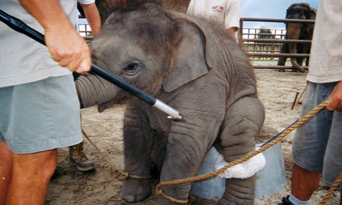 L'arrêt de la maltraitance animale !
