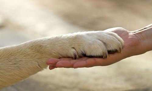 Plus de monde dans la fondation de la Lune Rousse qui aide les animaux