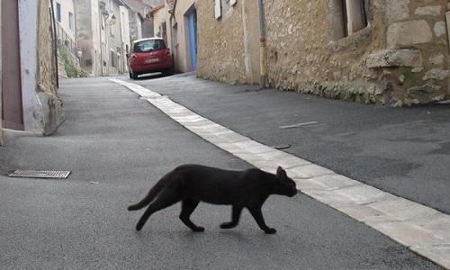 Arrêtez de laisser tuer les chats sur Générac (Gard)