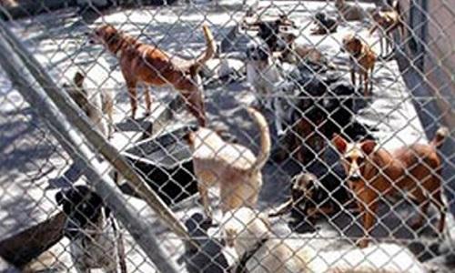 Pétition : Sauvons les animaux de compagnie de Mayotte