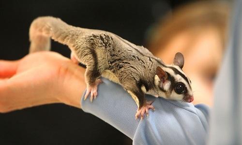 Interdire les nouveaux animaux de compagnie (NACS) comme animal de compagnie !