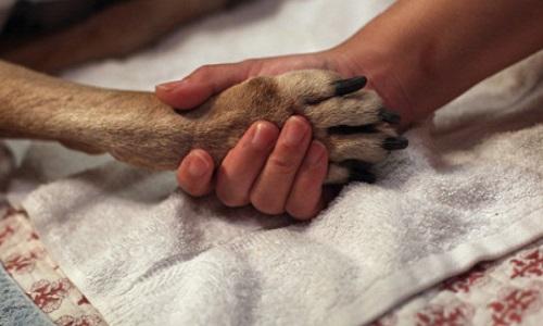 Interdiction d'euthanasier les animaux en bonne santé